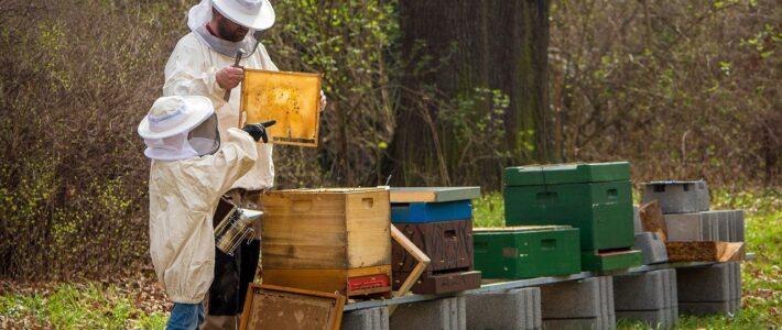 Come diventare apicoltore anche ai tempi del Covid